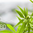 Get More From CBD Cigarettes